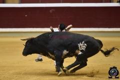 recortadores Logroño (42)
